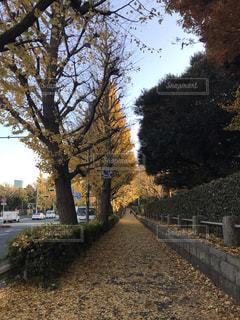 黄色の道の写真・画像素材[1827644]
