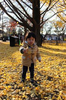 イチョウの絨毯と男の子の写真・画像素材[1850421]