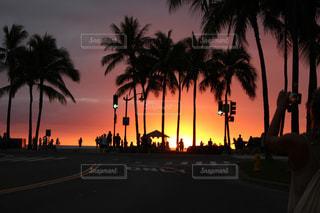 ハワイの夕暮れとヤシの木の写真・画像素材[1862017]