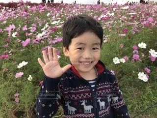 コスモス畑と男の子の写真・画像素材[2261984]