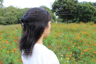 キバナコスモスの花畑と女の子の写真・画像素材[2475927]