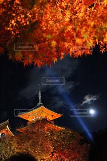 紅葉ライトアップの写真・画像素材[2668844]