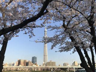 都市の大きな木の写真・画像素材[3054877]