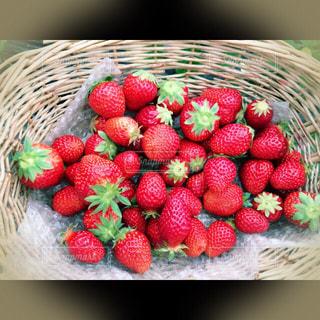 赤,いちご,フルーツ,果物,いちご狩り