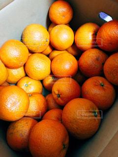 オレンジ,果物,フレッシュ,柑橘類,たんかん