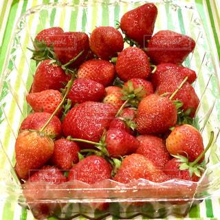 食べ物,春,透明,いちご,苺,フルーツ,果物,いっぱい,茎,たくさん,甘い,いちご狩り,新鮮,赤色,緑色,イチゴ,パック,縞模様,トレイ,茎付き