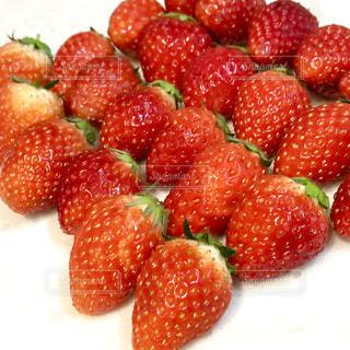 食べ物,フルーツ,果物,たくさん,赤色,白色,緑色,イチゴ,ななめ,並べた,ならべた