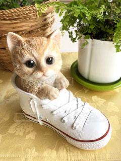 スニーカーに入る子猫の写真・画像素材[1800483]