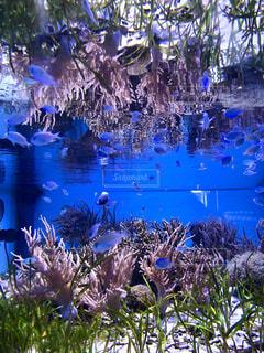 水面で反射する水槽の写真・画像素材[2044901]