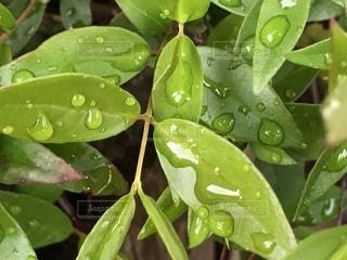 連なる水滴の写真・画像素材[2107913]