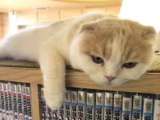 本棚の上でひと休み♡の写真・画像素材[2333281]