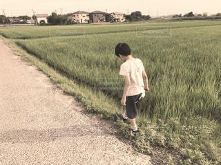 散歩,一人,田んぼ,ノスタルジー,フィルム,男の子,セピア,フィルム写真,1,砂利道,フィルムフォト