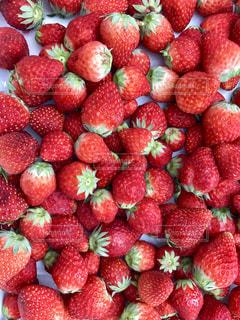 いちご,苺,フルーツ,果物,果実,fruits,イチゴ,苺ちゃん