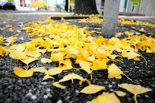 秋,銀杏,イエロー,名古屋市,黄色い,yellow,いちょう