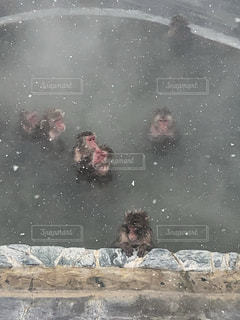 温泉の写真・画像素材[1778731]