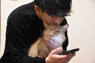 猫とスマホと俺の写真・画像素材[2287416]