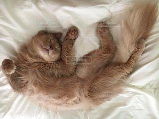 ベッドに横たわる猫の写真・画像素材[2306354]