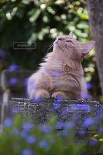 花の上に座っている猫の写真・画像素材[2306361]