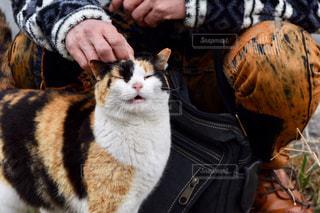 猫,動物,人物,ネコ