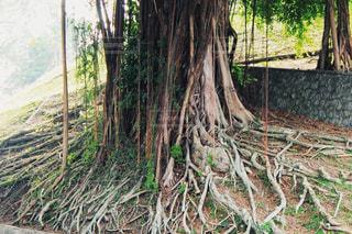 自然,街並み,木,草,樹木,マレーシア,海外旅行,スナップ