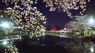 風景,桜,夜,橋,水,池,夜桜,ライトアップ