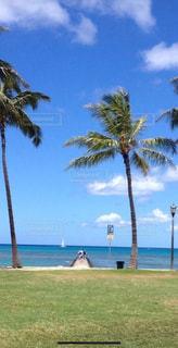 ビーチ,雲,青空,砂浜,水面,海岸,ヤシの木,ハワイ,日中