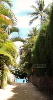 ビーチ,砂浜,海岸,ヤシの木,ハワイ,日中