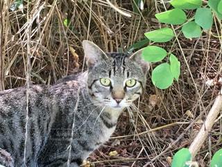 草の中に立っている猫の写真・画像素材[722940]