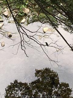 近くの木のアップの写真・画像素材[722944]