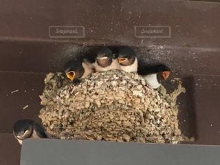 近くに鳥のアップの写真・画像素材[722945]