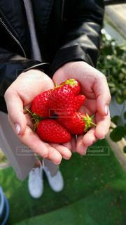 果物を持っている手の写真・画像素材[1782054]