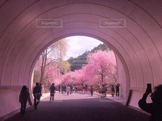桜のトンネルの写真・画像素材[1791703]