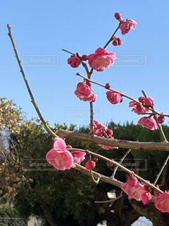 空,花,紅梅