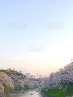 自然,空,春,桜,東京タワー,屋外,ボート,夕焼け,夕方,お花見,千鳥ヶ淵,さくら