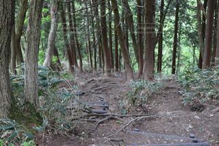 険しい登山道の写真・画像素材[2229271]