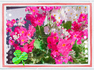 色とりどりの花の写真・画像素材[1796473]