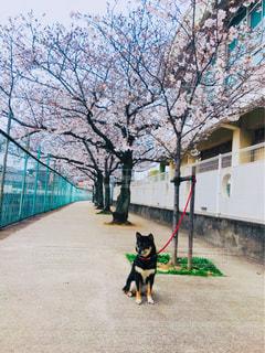 春の陽気な散歩の写真・画像素材[1832716]