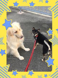 散歩中、仲良し2人🐶🐶💕の写真・画像素材[2013124]