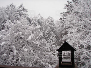 フォレスト内のツリーの写真・画像素材[1787716]