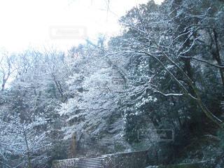雪に覆われた木の写真・画像素材[1789057]