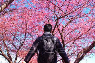 桜のトンネルの写真・画像素材[1791225]