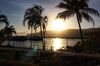 風景,海,木,太陽,観光,朝,オーストラリア,海外旅行,ケアンズ