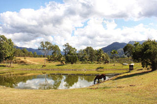 風景,池,観光,馬,オーストラリア,海外旅行,草木,ケアンズ