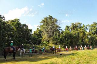 観光,馬,オーストラリア,海外旅行,草木,ケアンズ
