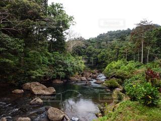 観光,ハイキング,海外旅行,ジャングル,草木,トレイル,パプアニューギニア