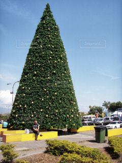 風景,観光,クリスマス,ツリー,海外旅行,パプアニューギニア