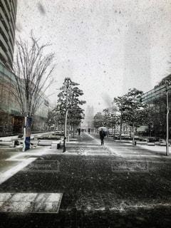 横浜で久しぶりの雪の写真・画像素材[1817802]