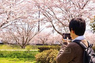 近くの公園でお花見の写真・画像素材[1832009]