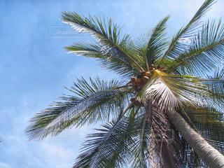 ヤシの木を見上げるの写真・画像素材[1860649]