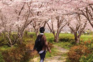 男性,風景,花,春,桜,ピンク,後ろ姿,人物,背中,人,後姿,さくら